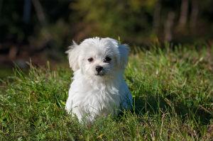 US Wills and Trusts - Million Dollar Pets
